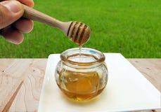 Honey Dipping met honing in glaskruik op natuurlijke achtergrond macro, Houten honingsdipper royalty-vrije stock afbeelding