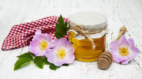 Honey and dog rose flowers royalty free stock images