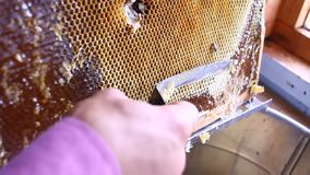 Honey dripping from honey dipper on honeycomb, over yellow background. Thick organic honey dipping from the wooden honey. Real Honey dripping from honey dipper stock video footage