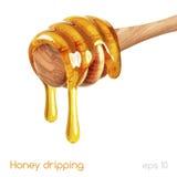 Honey dripping vector illustration