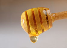 Honey dripping from a wooden honey Royalty Free Stock Images