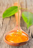 Honey dripping Stock Photography