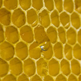 Honey drops Stock Photography