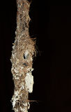Honey eaters empty nest Stock Photo