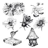 Honey elements set. Vector sketches hand drawn royalty free illustration