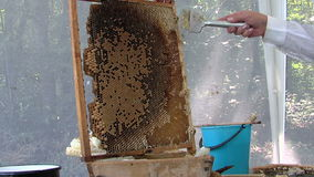 Honey extraction stock video footage