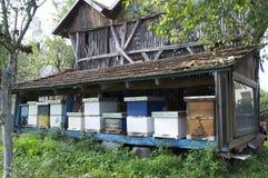 Organic Honey Bee Farm Stock Image