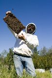 Honey Farmer. A honey farmer holding up a frame from a bee hive covered with bees Stock Image