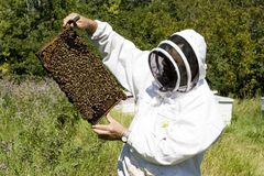 Honey Farmer. A honey farmer holding a bee hive frame covered with bees royalty free stock photos
