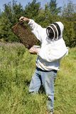 Honey Farmer. A honey farmer holding up a frame from a hive covered in bees Royalty Free Stock Images
