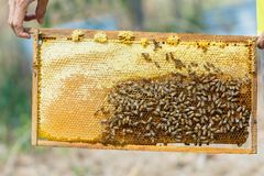 Beekeeping,Close up of bees in a beehive on honeycomb,. Honey from farming,Frames of a bee hive. Beekeeper harvesting honey royalty free stock photography