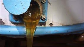 Honey flow stock video footage