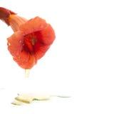 Honey flower Stock Image