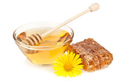 Honey and flower Stock Images