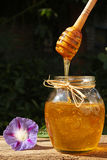 Honey flowing down from dipper in glass jar. Stock Photo