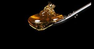 Honey Flowing van Lepel tegen Zwarte Achtergrond, stock video