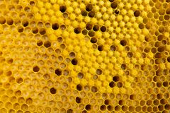 Honey frame with honey and bee larvae close-up. Beekeeping and apiary. Selective focus. Horizontal frame royalty free stock photo