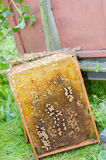 Honey frame Stock Images