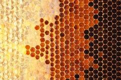 Honey in frame. Stock Image