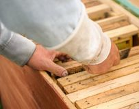 The honey frames are pulled out of the hive by a beekeeper stock photography