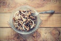 Honey Fungus adobado conservado Foto de archivo