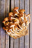 Honey fungus (Armillaria mellea) Stock Photo