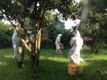 Honey harvesting Stock Photo