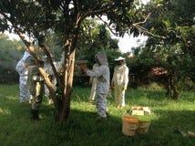 Honey harvesting Stock Image