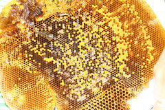 Honey from the hive making Royalty Free Stock Image
