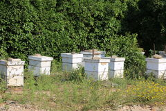 Honey Hives. Royalty Free Stock Images