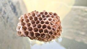 Honey Home på vatten Royaltyfri Foto