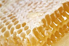 Honey in honeycomb. Close-up Royalty Free Stock Image