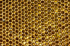 Honey in honeycomb. Honey pump before. honey flows from cell Stock Photography