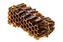Honey in Honeycomb Stock Photos