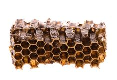 Honey in Honeycomb Stock Images