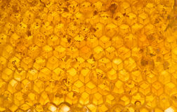 Honey in honeycomb Stock Image