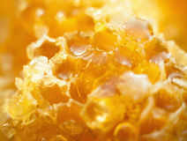 Honey in the Honeycomb background Royalty Free Stock Photography