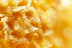 Honey in the Honeycomb background Royalty Free Stock Image