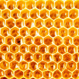 Honey in honeycomb closeup Royalty Free Stock Images