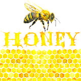 Honey, honeycomb, sweet bee. Watercolor Stock Photos