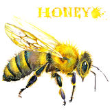 Honey, honeycomb, sweet bee. Watercolor vector illustration