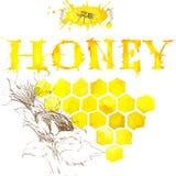 Honey, honeycomb, sweet bee. Watercolor Stock Photography