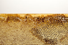 Honey with honeycomb on wooden table. Honey on wooden table white background Stock Photo