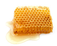 Honey honeycombs Royalty Free Stock Photography