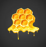 Honey in honeycombs Stock Image