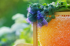 Honey honeycombs and flower of a Phacelia on a saucer Stock Photography