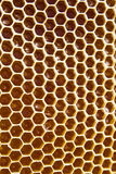 Honey in honeycombs Stock Images