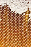 Honey in honeycombs Royalty Free Stock Photo