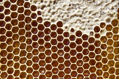Honey in honeycombs Stock Photography