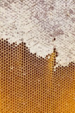 Honey in honeycombs Stock Photos
